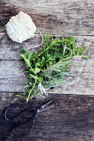 Fresh organically grown herbs tied together in a bundle with antique scissors.   photo