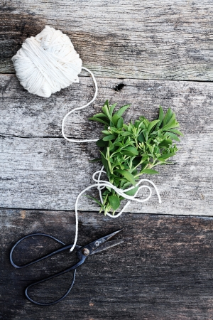 Fresh organically grown stevia tied together in a bundle with antique scissors.   photo