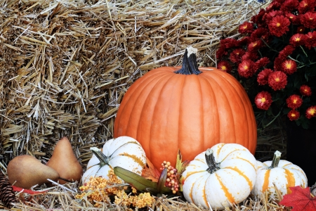 gourds: Pumpkins and Chrysanthemums on a bale of straw with berries and pears.