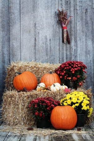 gourds: Pumpkins and Chrysanthemums on a bale of straw against a rustic background.