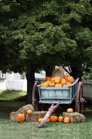 trees photography: Wagon load full of pumpkins under a shady oak tree for sale. Stock Photo