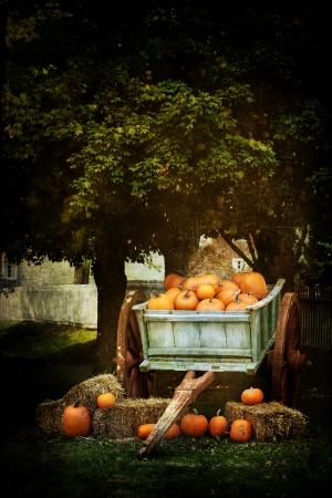 bale: Wagon load full of pumpkins under a shady oak tree for sale with a painterly effect.