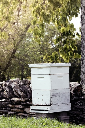 Beekeepers hive near a rock wall in an apple orchard. Shallow depth of field.
