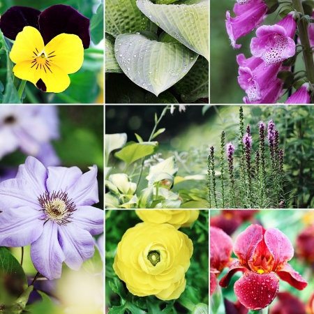 Beautiful variety of colorful flowers and plants collage. photo