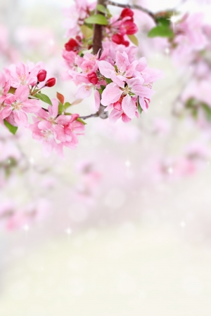 Beautiful spring pink tree blossoms with available copy space.