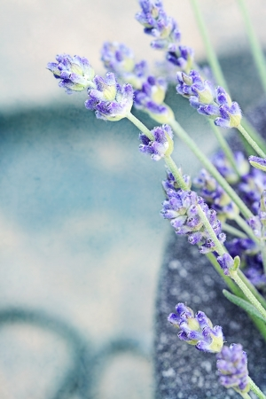 Close up of lavender flowers in a mortar. Extreme shallow depth of field.  photo