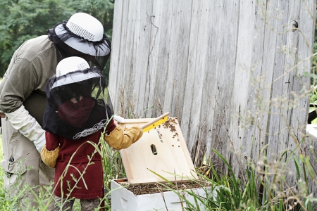 beekeeper: Father and daughter working on bee hive together.