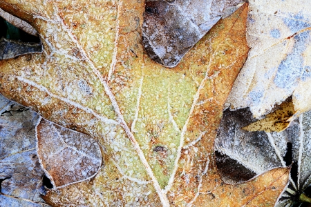 Abstract macro of a frozen leaf. photo