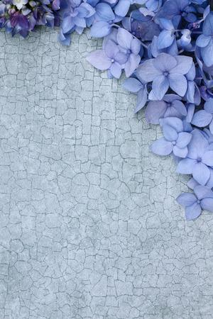 craquelure: Hortensias sobre un fondo craquelado con espacio para espacio de la copia