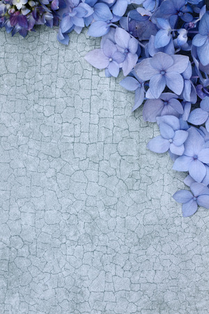 Hydrangeas over a craquelure background with room for copy space