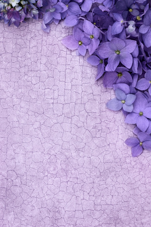 Purple Hydrangea blossomed over a craquelure  with room for copy space. Standard-Bild