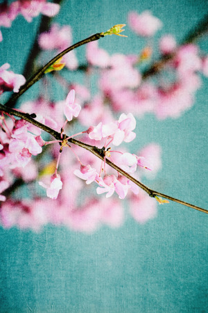 Abstract of vintage redbud tree flowers with antique style