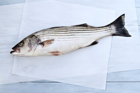 sea bass: Freshly caught striped bass being prepared for dinner.