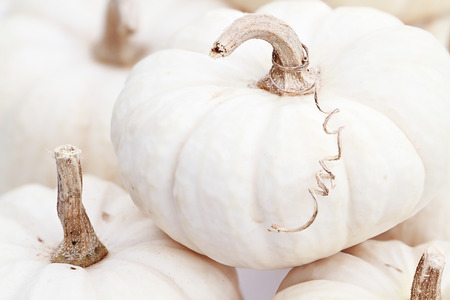 Close up of beautiful white pumpkins. Extreme shallow depth of field. photo