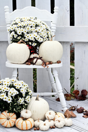 Beautiful white pumpkins and mums sitting on an old vintage chair on a porch in the autumn.