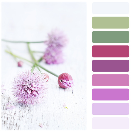 swatches: Freshly cut organic chives lying on a wooden background with color palette.