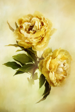 Digital painting of beautiful yellow peonies. Stock Photo