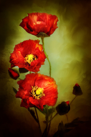 Digital painting of beautiful red poppies. photo