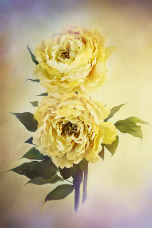 Digital painting of delicate beautiful yellow peonies. Stock Photo