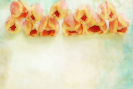 Beautiful abstract of a soft orange tulip and bokeh blur with room for copy space. photo