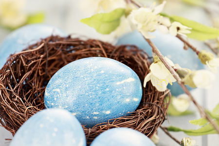 blue egg: Easter eggs colored a natural blue with extreme shallow depth of field. Selective focus on egg in nest.