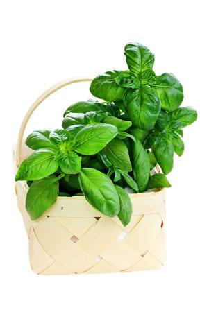 over white: Basket of freshly cut basil over white background.