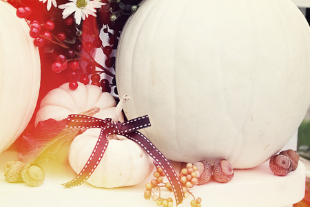 minature: Beautiful decorations of large and minature white pumpkins.