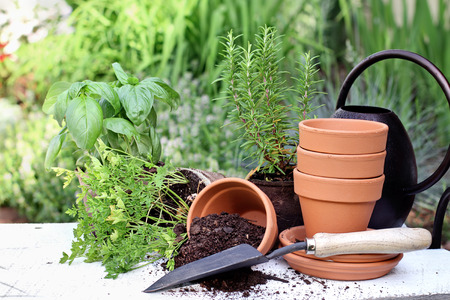rosemary flower: Rustic table with terracotta pots, potting soil, trowel and herbs in front of a beautiful garden. Extreme shallow depth of field.