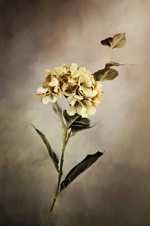 Digital painting of a beautiful hydrangea flower.