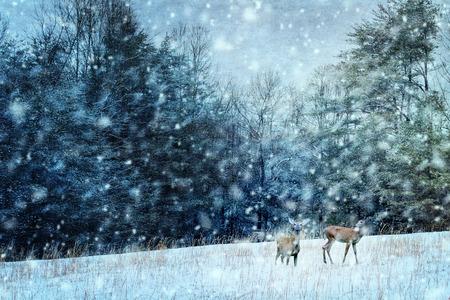 venado: Imagen de textura de dos ciervos durante una noche de tormenta de nieve. Foto de archivo