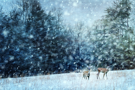 Textured image of two deer during a snowy stormy night.