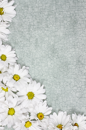 craquelure: Daisy flowers over green craquelure background with room for your text.