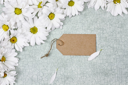 room for your text: Blank card and daisies over green craquelure background with room for your text.