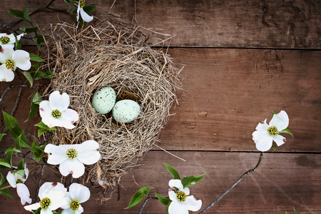 Bird nest with blue eggs over a rustic wood table top amidst flowering dogwood branches and flowers. Image shot from above with copy space.