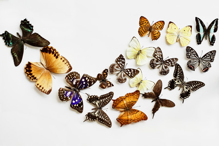 Variety of Butterflies over a white background. Image shot in flatlay style. Фото со стока