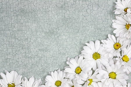 Fresh Daisy flowers over green craquelure background with room for your text.