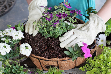 Demonstration of a young woman giving a tutorial on how to plant a hanging basket or pot of flowers. Flowers include Verbena, Petunias, Creeping Jenny and Alyssum. 스톡 콘텐츠