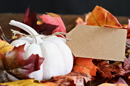 Mini white pumpkin with attached blank card. Free space for text. Stock Photo