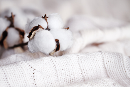 Cotton flowers lying on top of a knitted blanket. Extreme shallow depth of field with selective focus on boll. Stock Photo