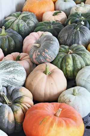 Large variety of colorful pumpkins picked fresh from the field and ready to be sold at the Farmers Market.