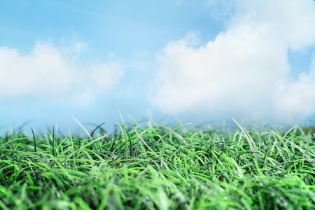 Green grass and beautiful blue sky with white wispy clouds and sunlight. Great for backgrounds and environmental concepts