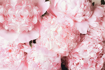 Hermoso ramo de fondo de flor de peonía rosa. Vista superior o endecha plana.
