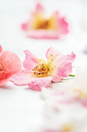 Homemade sugared or crystallized edible rose flowers on a white wooden rustic table. Selective focus with blurred background.