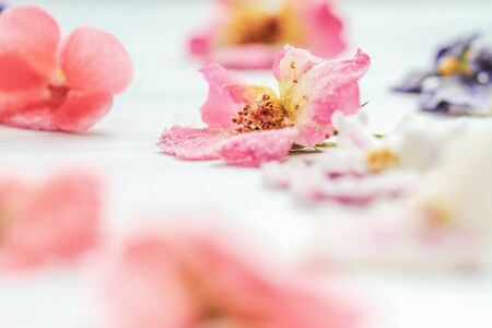 Homemade sugared or crystallized edible flowers on a white wooden rustic table. Selective focus on rose in center with blurred foreground and background. 版權商用圖片