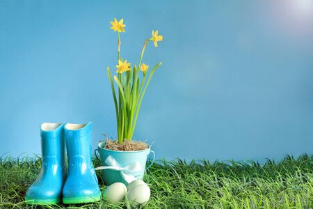Natural Easter eggs, rubber rain boots and yellow daffodil flowers in grass against a blue background with room for copy space.