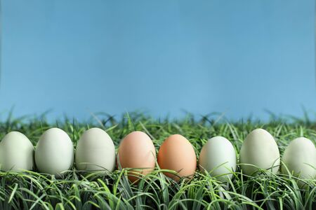 Natural colored Easter eggs in grass against a blue background with room for copy space. Stockfoto