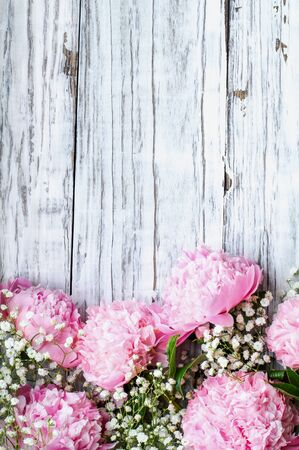 Pink Peonies and Babys Breath flowers over a white rustic wood table background  with copy space for your text. Flat lay.
