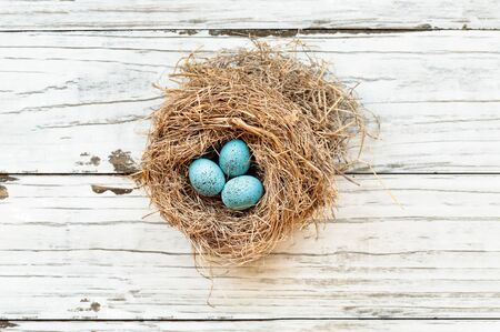 Real birds nest over a rustic wooden white table with small speckled Robin blue eggs. Selective focus on eggs with slight blurred background.   Stockfoto