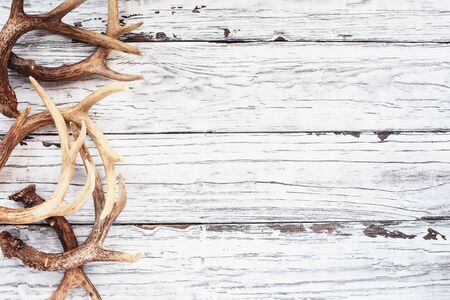 Border of real white tail deer antlers over a rustic wooden table. These are used by hunters when hunting to rattle in other large bucks. Free space for text. Top view. 版權商用圖片