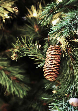 Pine Cone on a tree Stock Photo